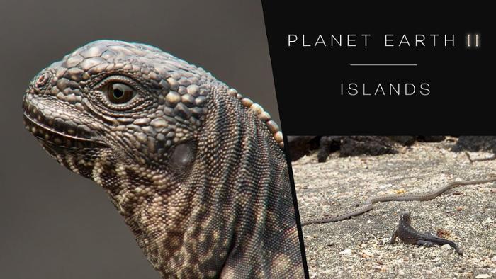 bbc iguana.jpg